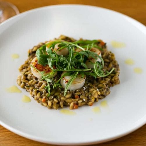 Risotto on a white plate topped with scallops and arugula
